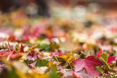 Spadków liście w stosie podczas jesieni Selekcyjna ostrość z Zdjęcia Stock