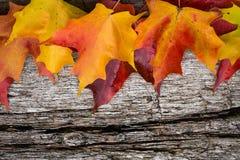 Spadków liście klonowi na drewnianym stole Obraz Royalty Free