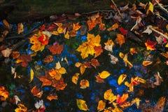 Spadków liście na wodzie fotografia stock