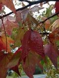 Spadków liście w deszczu Zdjęcia Royalty Free