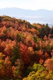 Spadków liście w Skalistych górach nad Provo, Utah Fotografia Stock