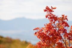 Spadków liście w Skalistych górach nad Provo, Utah Obrazy Stock