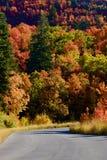 Spadków liście w Skalistych górach nad Provo, Utah Zdjęcia Stock