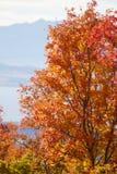 Spadków liście w Skalistych górach nad Provo, Utah Zdjęcie Royalty Free