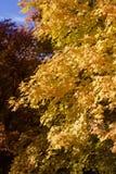 Spadków liście w Skalistych górach nad Provo, Utah Obraz Royalty Free
