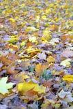 Spadku autmn liście zdjęcie stock