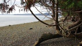 Spadku cedr i wysuszony kelp zdjęcie wideo