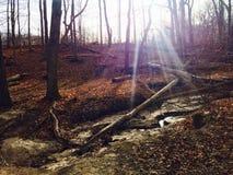 Spadku czasu światła słonecznego natury wzgórze Obrazy Stock