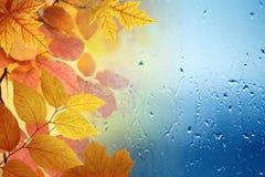 Spadku deszczowy dzień są widoczni przez szkła, żółci liście fotografia royalty free