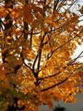 Spadku drzewo Obrazy Stock