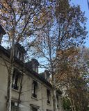 Spadku drzewo Zdjęcie Royalty Free