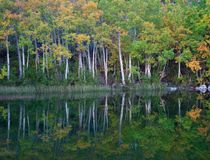 Spadku i jesieni szczegół Zdjęcie Stock