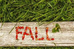 Spadku i lata jagody Eco tło dla teksta Fotografia Stock