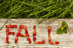 Spadku i lata jagody Eco tło dla teksta Obraz Stock