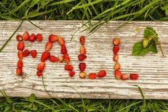 Spadku i lata jagody Eco tło dla teksta Zdjęcia Stock