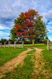 Spadku klon i rozłamu sztachetowy ogrodzenie, Cumberland Gap park narodowy obraz royalty free