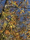 Spadku kolor Fotografia Royalty Free
