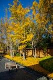 Spadku kolor i dywan liście zdjęcie stock