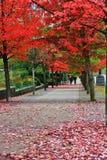 Spadku kolor, jesień liście w Węglowym schronieniu, W centrum Vancouver, kolumbiowie brytyjska Obrazy Stock