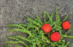 Spadku kolor z nasieniodajnymi strąkami Zdjęcia Stock