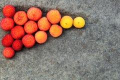 Spadku kolor z nasieniodajnymi strąkami Zdjęcie Royalty Free