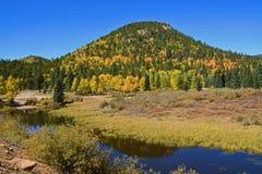 Spadku kontrast sosny i apsydy w górach Obrazy Royalty Free