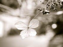 Spadku kwiat Obrazy Royalty Free
