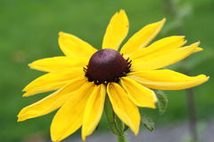 Spadku kwiat Obraz Stock