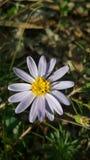 Spadku kwiat fotografia stock
