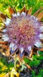 Spadku kwiat w Portland zdjęcie stock