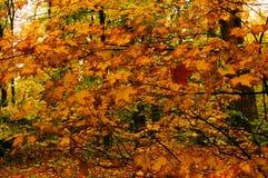 Spadku las zdjęcie royalty free