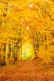 Spadku las wlec zwidłowanie Zdjęcie Royalty Free