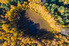 Spadku lasu tło wiejska otoczenia jesień błękit długa natura ocienia niebo Powietrzny kolorowy krajobraz Żółty jesień las z góry obrazy stock