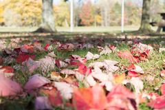 Spadku liścia zakończenie up Obraz Royalty Free