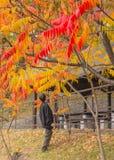Spadku liścia kolekcja Fotografia Royalty Free