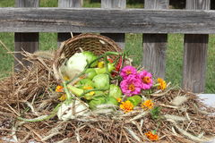 Spadku żniwo z jaskrawymi kwiatami: pomidory, kabaczki, fasole Fotografia Stock