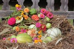 Spadku żniwo z jaskrawymi kwiatami: pomidory, kabaczki, fasole Obraz Royalty Free