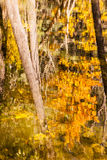 Spadku odbicia abstrakt Fotografia Royalty Free