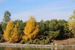 Spadku spojrzenia drzewa na Wascana Jeziorny Regina Kanada fotografia stock