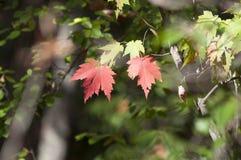 Spadku ulistnienia jesieni liści Zamknięty Up tło Zdjęcie Royalty Free