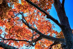 Spadku ulistnienie przy orzecha włoskiego wzgórza parkiem, Nowy Brytania, CT zdjęcia royalty free