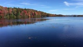 Spadku ulistnienie wzdłuż Androscoggin rzeki w północny New Hampshire zdjęcie wideo