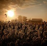 Spadku wschód słońca iluminuje żniwo nagrodę zdjęcia royalty free