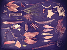 Spadków elementów jesieni blackboard rocznika tło Zdjęcia Stock