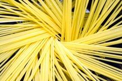Spaghetti Royalty Free Stock Photos