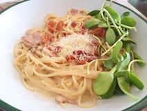 Spaghetti Carbonara in a plate. Spaghetti Carbonara in a white plate with sprout Stock Image