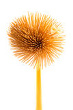 Spaghetti flower Stock Photography
