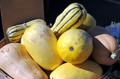 Spaghetti Squash Royalty Free Stock Photography