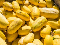 Spaghetti Squash Royalty Free Stock Images