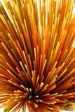 Spaghetti variopinti Fotografia Stock Libera da Diritti